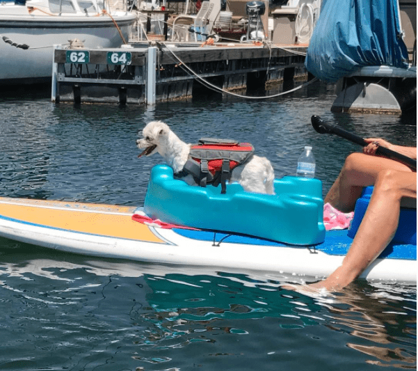 Pets love the FloatnThang